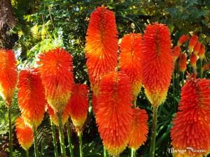 Fleurs Kuirau Parc