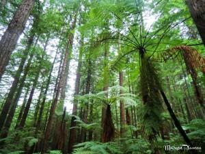 quoi voir autour de Rotorua