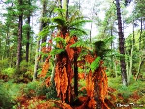 arbres waiotapu