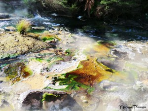 couleurs sol waimangu