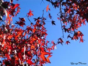 feuilles Kuirau Parc