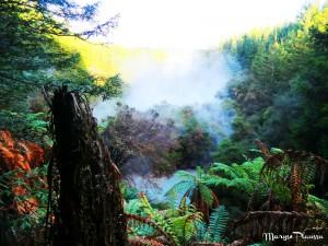 forêt fougères