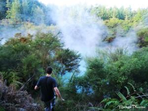 lac forêt