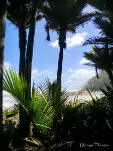 Heaphy Track - forêt de palmiers